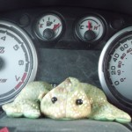 Little Green Frog's Journey of Love leaves traces over Sixty Thousand miles of Road