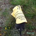 Tagish Tower Watch Dog is issued her personal Uniform for the 2012 Fire Watch Season